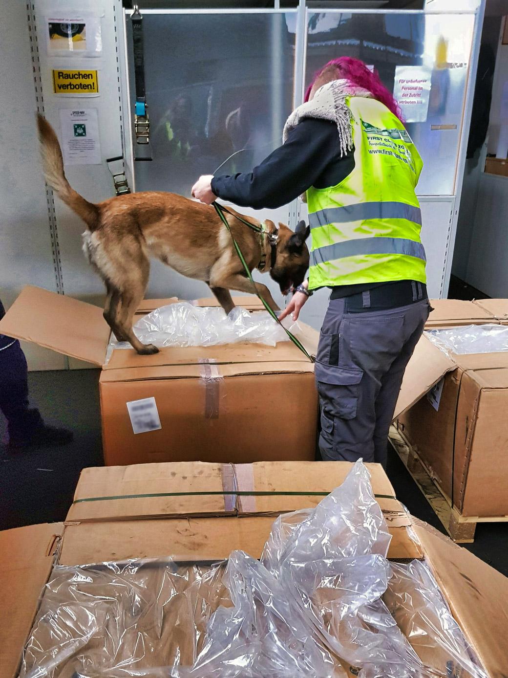 Sprengstoffspürhund untersucht Pakete, deren Verpackungsfolie geöffnet wurde.
